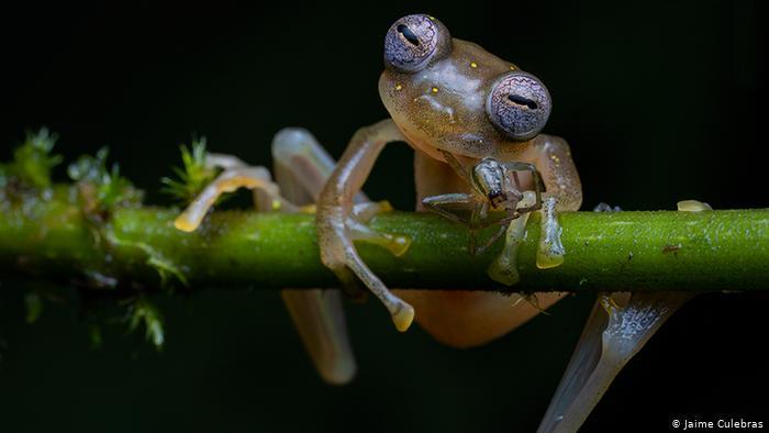 برترین عکسهای دنیای حیات وحش