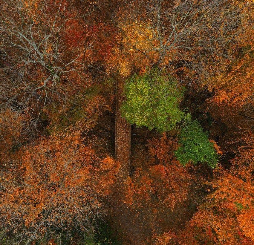 پاییز گیلان