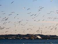 مرگ 2هزار پرنده مهاجر در میانکاله