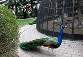 موزه طبیعت و حیات وحش دارآباد +عکس