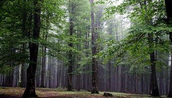 پرونده جنگلهای هیرکان ثبت جهانی میشود