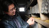کارخانه سوسک در چین +فیلم