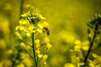 مزارع کشاورزی روستاهای تویسرکان +تصاویر