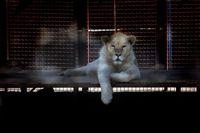 باغ وحش صفادشت ملارد +تصاویر