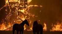 جنگلهای به وزین و مرخیل پاوه برای هفتمین روز در آتش +فیلم