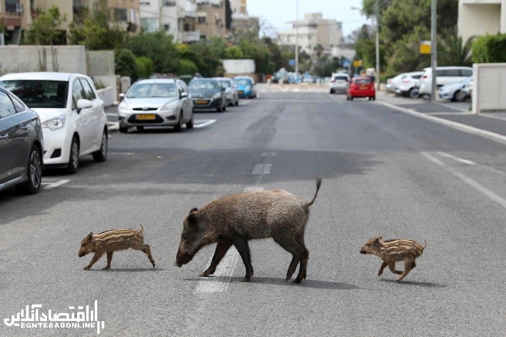 برترین تصاویر خبری ۲۴ ساعت گذشته/ 25 فروردین