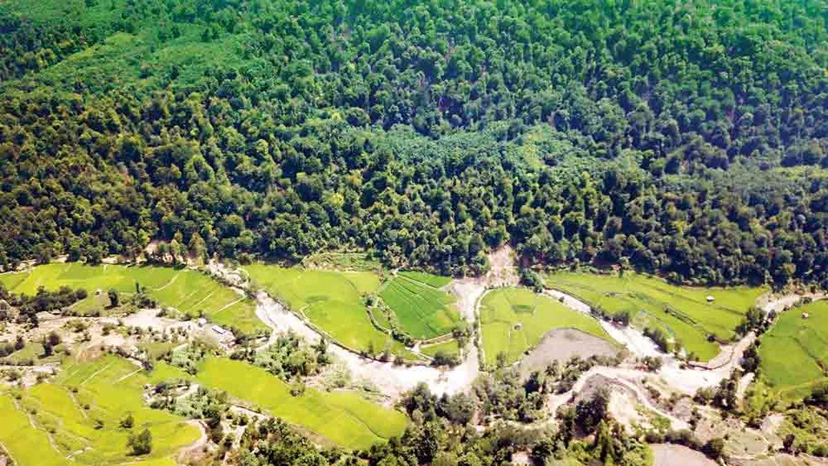 ماجرای عجیب وقف جنگلهای چند میلیون ساله شمال