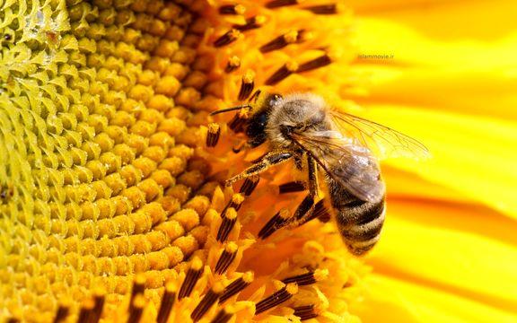 زنبورها هم جمع و تفریق میکنند!