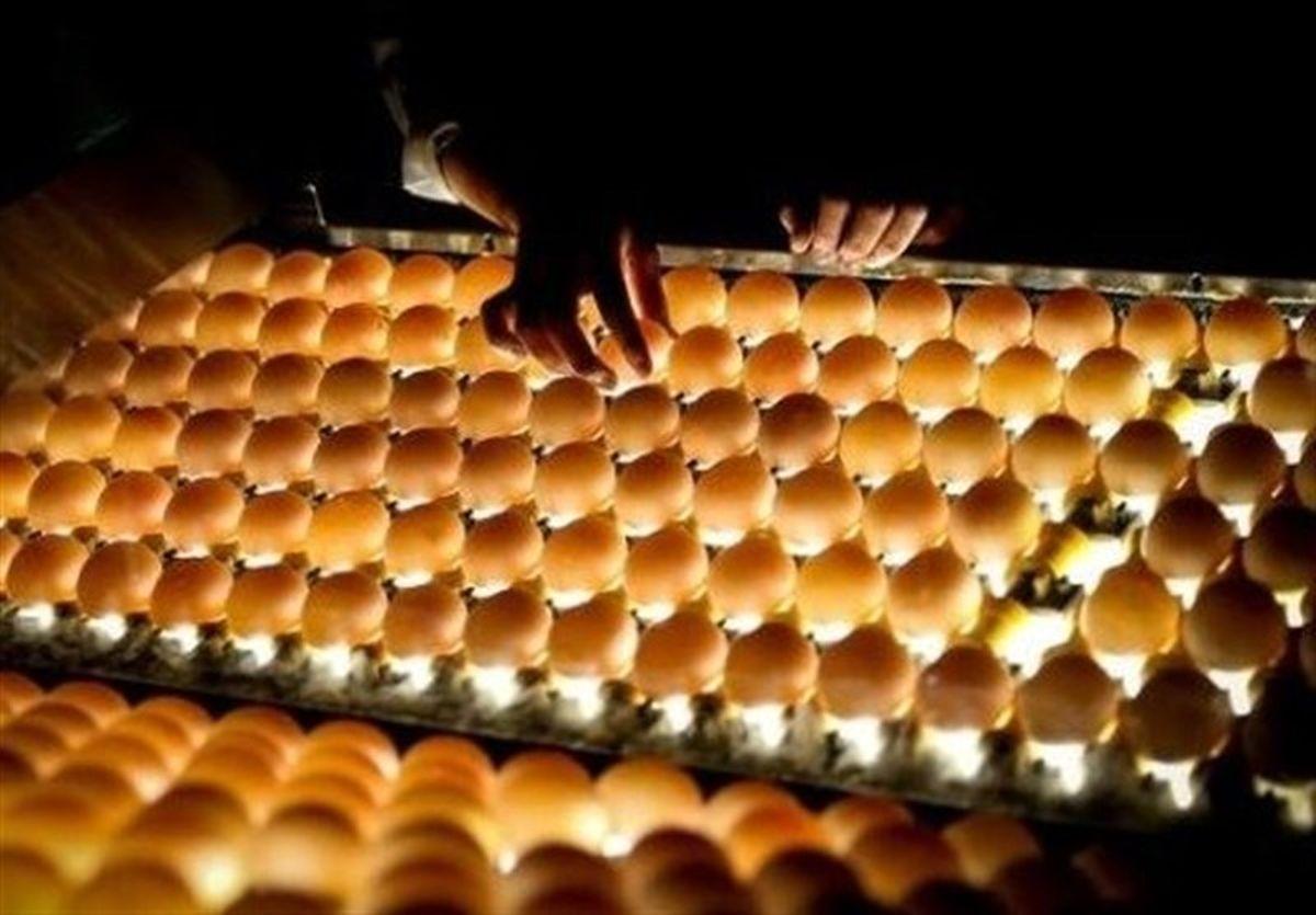 دلیل گرانتر بودن تخم مرغهای قهوهای