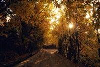 پاییز رنگارنگ +عکس