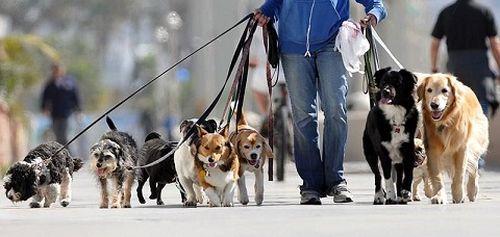 رونق مهدهای سگ در تهران!