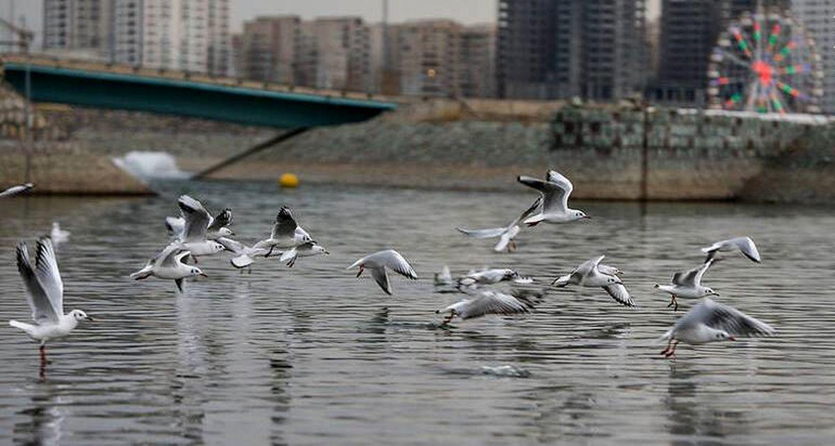 خرید یک میلیون و ۸۰۰هزار متر مربع آب از رودخانه کن برای تامین آب چیتگر