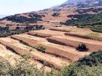۵۰۰هزار هکتار اراضی شیبدار کشور زیر کشت باغات
