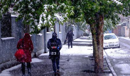 بارش برف بهاری و آسیب درختان