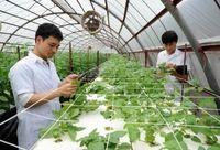 ۵ فرصت شغلی برای یک فارغالتحصیل کشاورزی