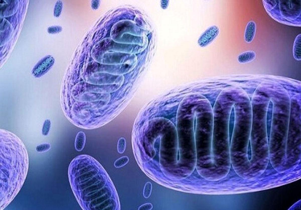 ورود دومین محموله داروی درمان قارچ سیاه به کشور