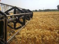 تنها ۳۰درصد از مطالبات گندمکاران باقی مانده است/ ۹۷درصد مطالبات در بخش دانههای روغنی به کشاورزان پرداخت شد