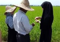 تامین مالی زنجیره ارزش اساس توسعه کشاورزی قراردادی است