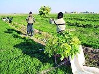 گرانی کالای اساسی ارتباطی به کشاورزان ندارد