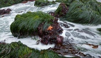 طرح پایلوت تولید محصولات فناورانه از جلبک به زودی آغاز میشود