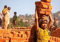 مواجهه با ٩٨میلیون کودک کار در بخش کشاورزی