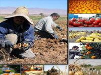 قیمت تولیدکننده بخش کشاورزی ۲۰درصد افزایش یافت