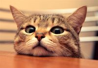 ورود سرزده گربه به یک کنفرانس خبری! + فیلم