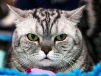 اجاره آپارتمان 1500 دلاری برای سکونت 2 گربه!