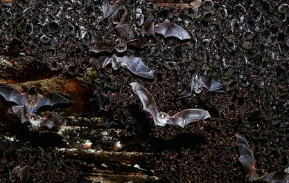 تصاویری از زیرزمین در جهان