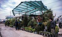پژمردگی بازار گل در توفان کرونا