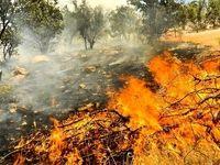 چهار هکتار از جنگلهای گیلانغرب در آتش سوخت