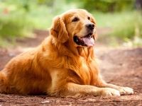 وفاداری تامل برانگیز یک سگ! +فیلم