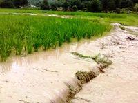 سیل 980میلیارد ریال به بخش کشاورزی ایلام خسارت زد