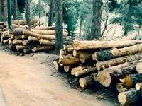 قطع ۱۷۰۰ درخت چیتگر برای اصلاح بصری!