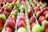 در ایام نوروز گرانی سیب نداریم/ پیشبینی صادرات 500هزار تن سیب