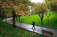 تبدیل ۳۰۰کیلومتر از حاشیه بزرگراهها به فضای سبز؛ در اوج کمآبی!/ آبیاری فضای سبز پایتخت به ۱۷۵میلیون مترمکعب آب نیاز دارد