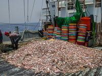 فعالیت 3000قایق صیادی بیمجوز در دریای عمان