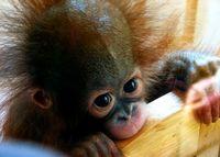 حیوانات جذابی که میتوانند انسان را از پای درآوردند +تصاویر