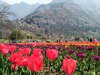 جشنواره گلهای لاله در بهشت روی زمین +تصاویر