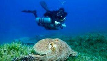 شنای غواص معلول روس در یکی از عمیقترین استخرها +فیلم