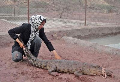 زن موفق ایرانی که کروکودیل پرورش می دهد