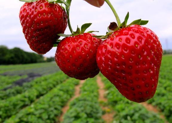 ۷ خاصیت شگفت انگیز توتفرنگی