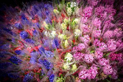 بازار گل در شیراز +تصاویر