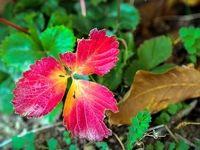برگهای خزان زده +تصاویر