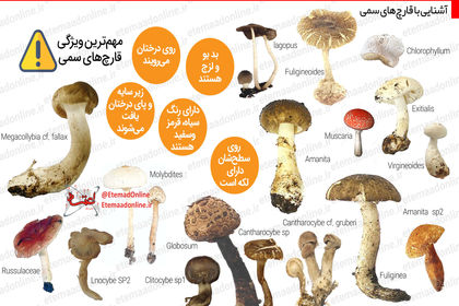 آشنایی با قارچهای سمی +اینفوگرافیک