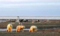 تلاش ترامپ برای تسهیل حفاری نفت آلاسکا پیش از آمدن بایدن