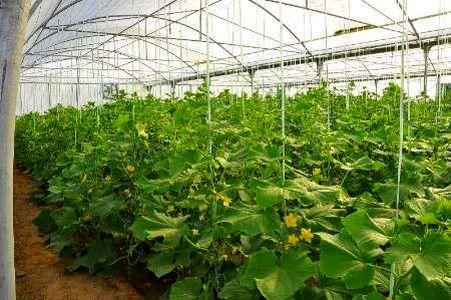 تهران رتبه اول توسعه گلخانه کشور را دارد/ ۵.۵درصد محصولات کشاورزی استان تهران گلخانهای هستند