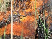 آتش در بیشتر جنگل های گیلان مهار شد