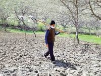 بحران کشاورزی از کشت بهاره پیداست
