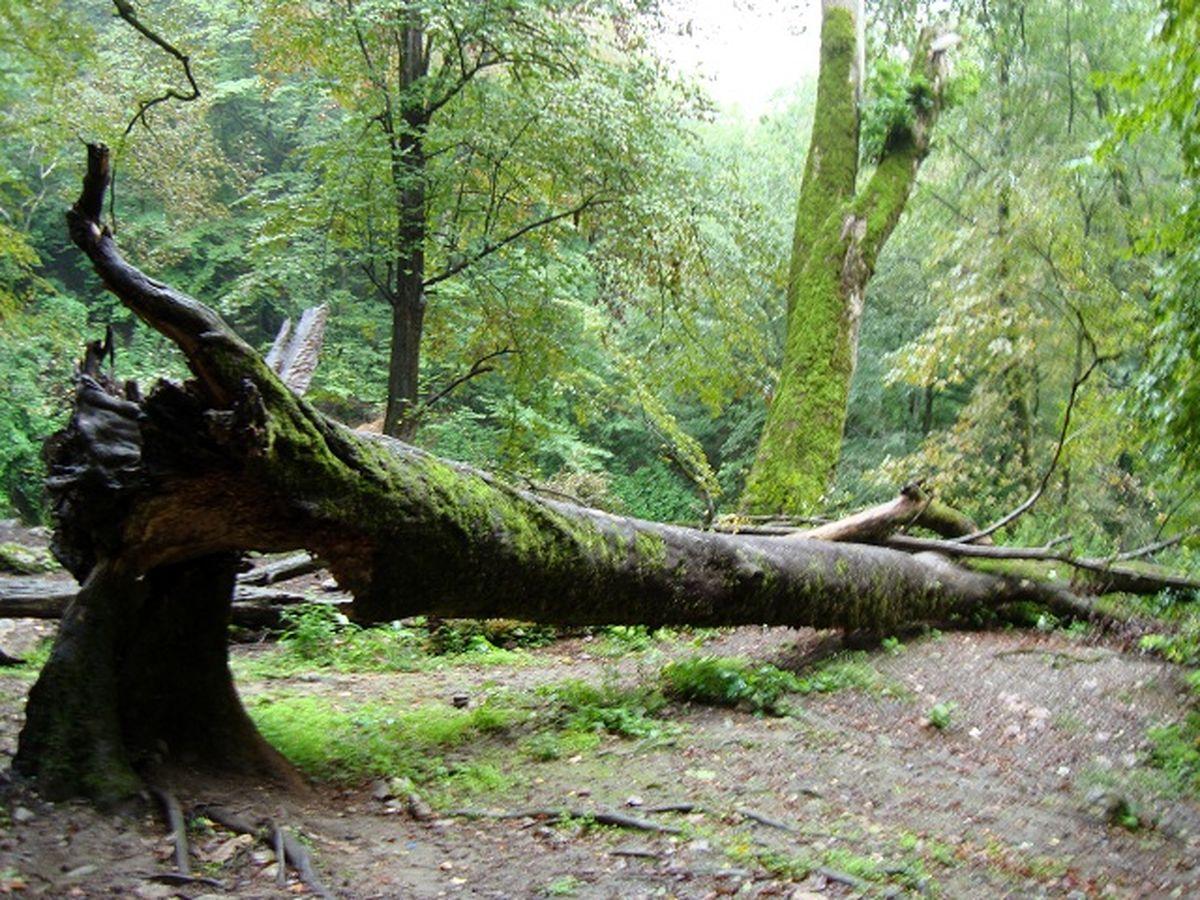 قانون از جنگل حمایت نمی کند